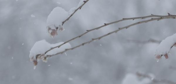 大雪たいせつ日本の暦