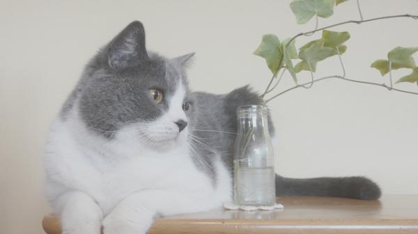 猫の日2020イベント大阪
