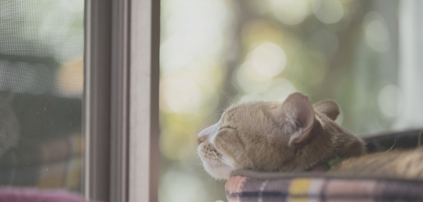 猫の日2020イベント東京