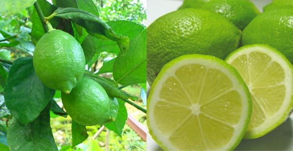 2ふるさと納税レモン減農薬人気